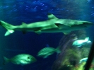 Allianz Arena und SeaLife_12