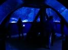 Allianz Arena und SeaLife_7
